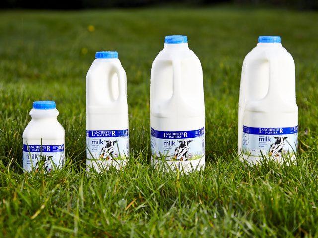 Whole Milk,
