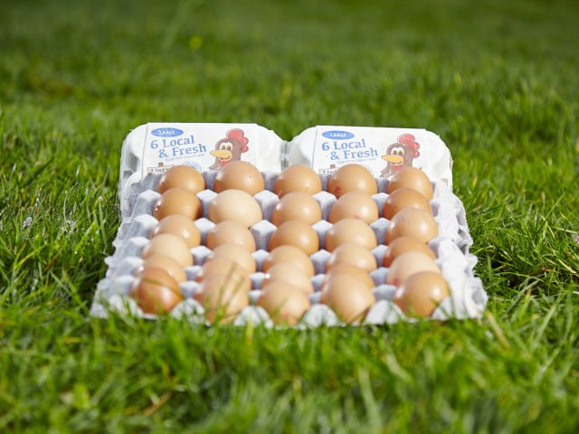 Eggs,